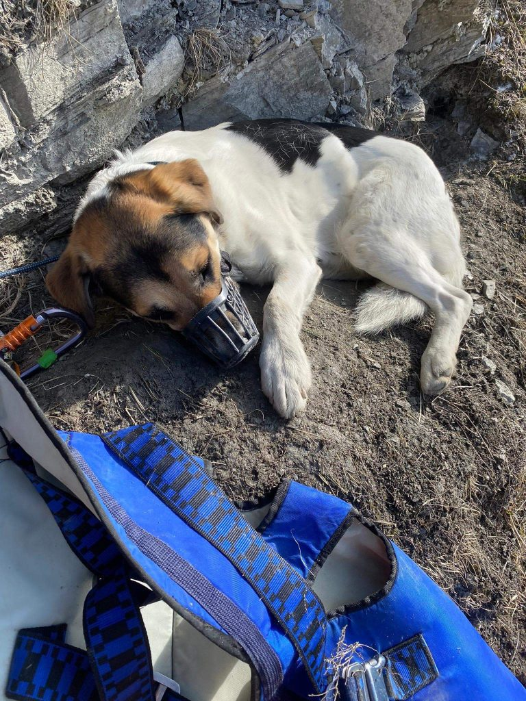 Dog found safe by drone team after missing for six days in Swiss Alps