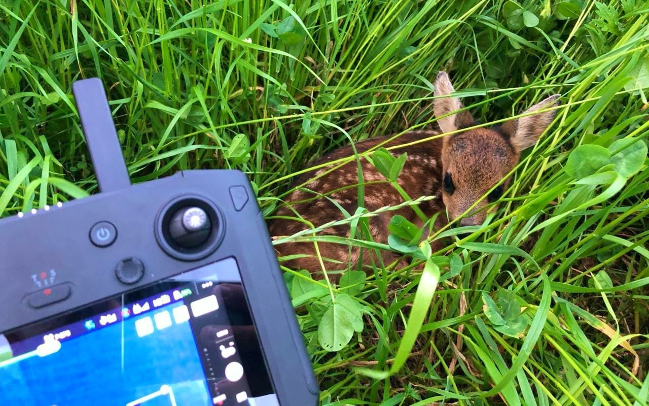Drone pilot saves fawns from an agonizing death in Swiss Alps