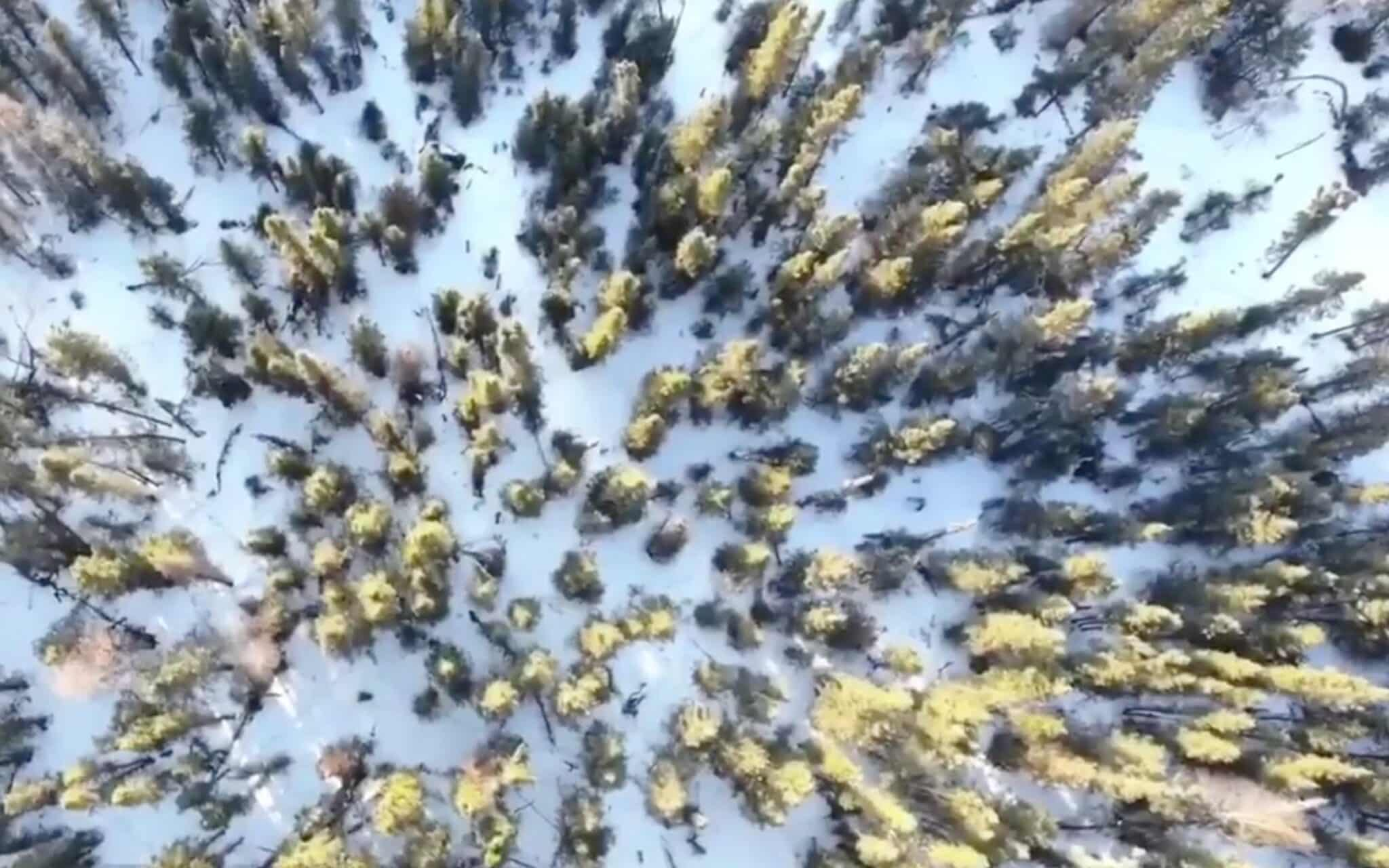 Hiker lost in Alaskan woods is found with help of a drone