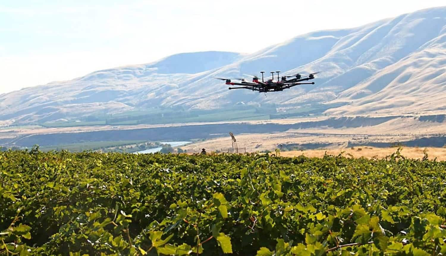 Washington State University uses drones to deter birds in trials