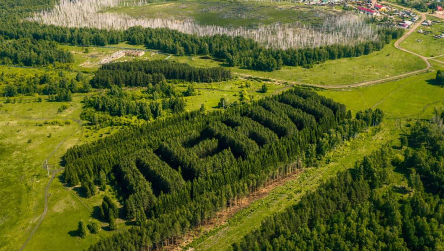 Lenin-shaped Siberian forest captured in drone photo