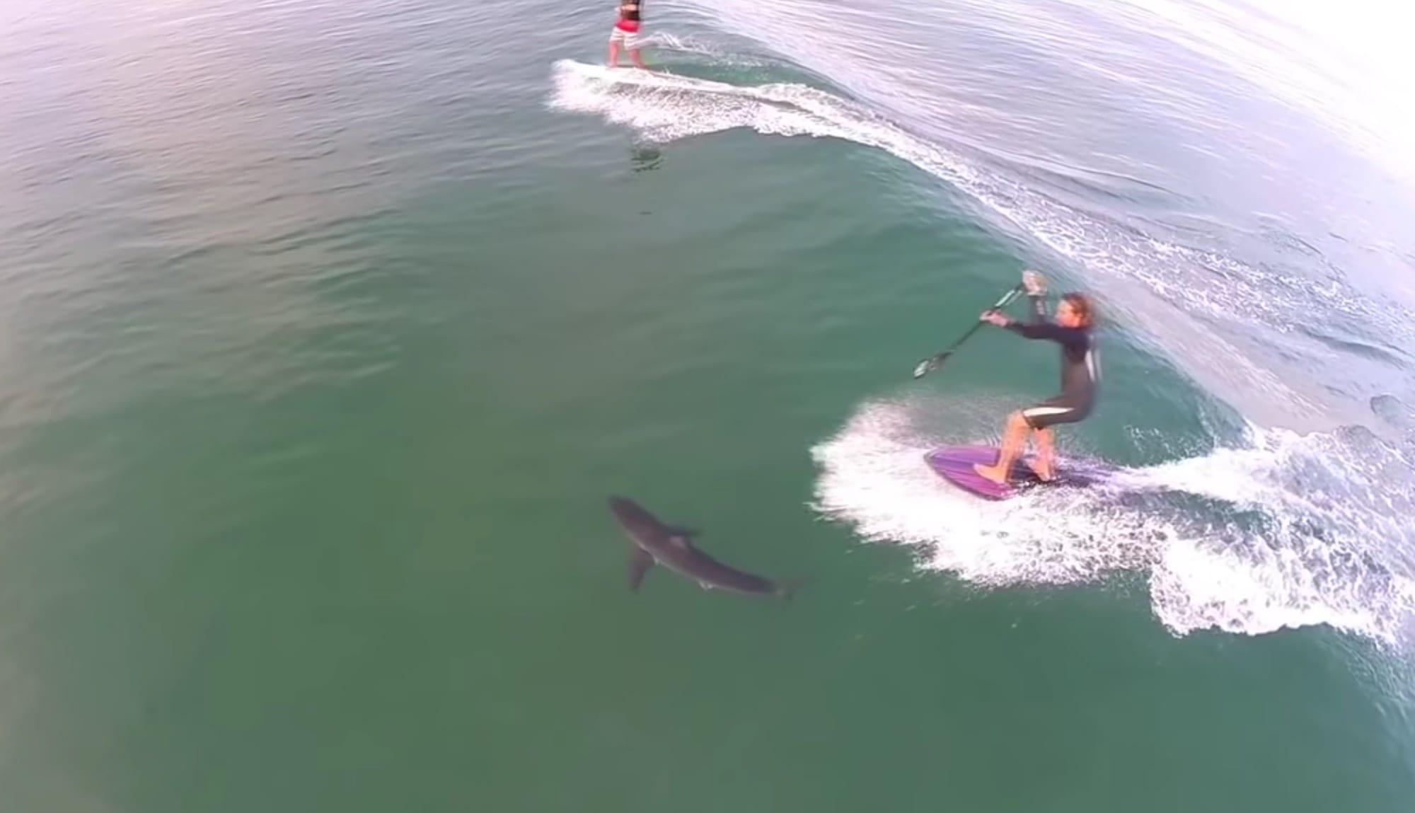 DOI drone order creates confusion for Cape Cod shark researchers