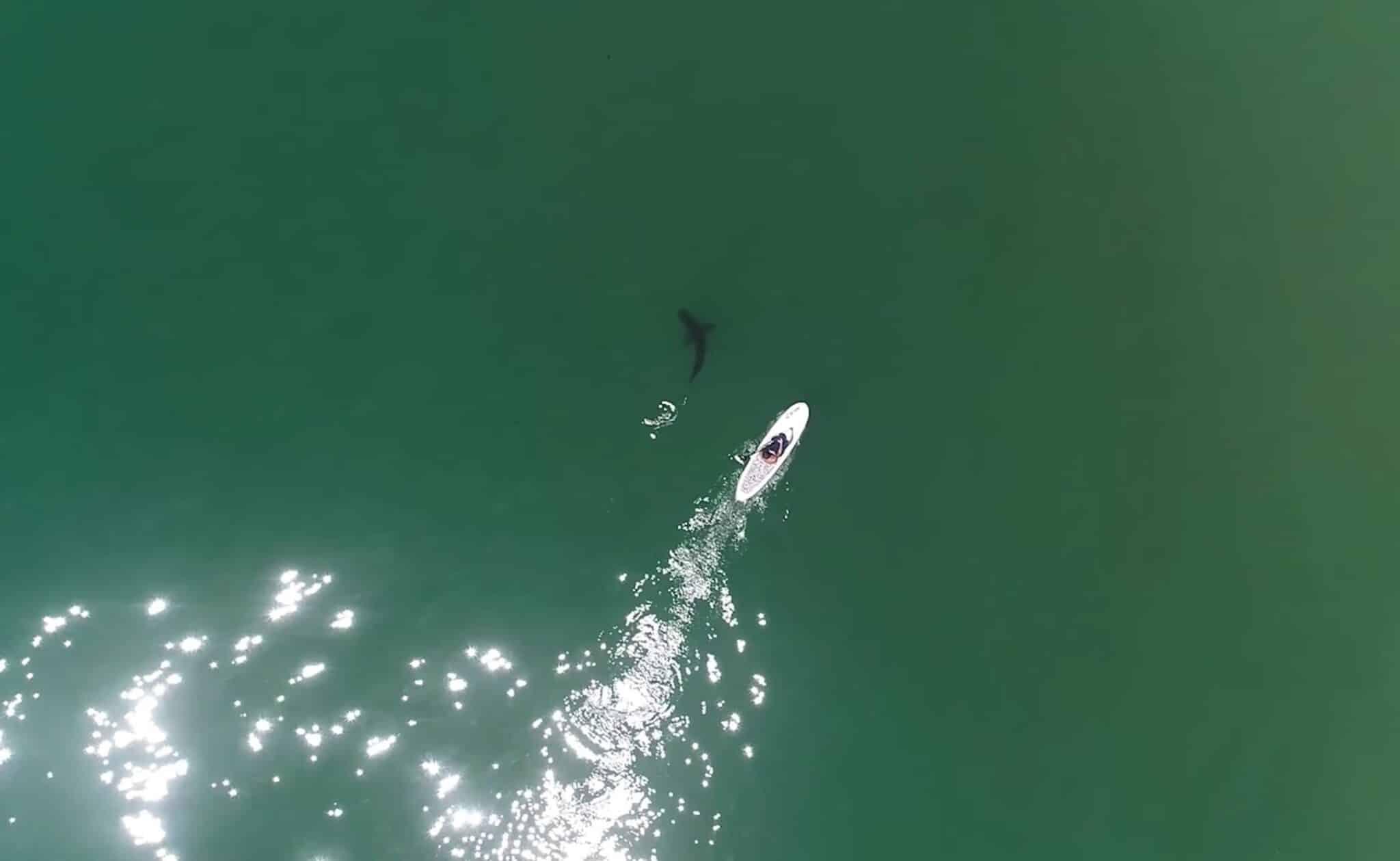 Drone program in development to detect sharks along California coastline
