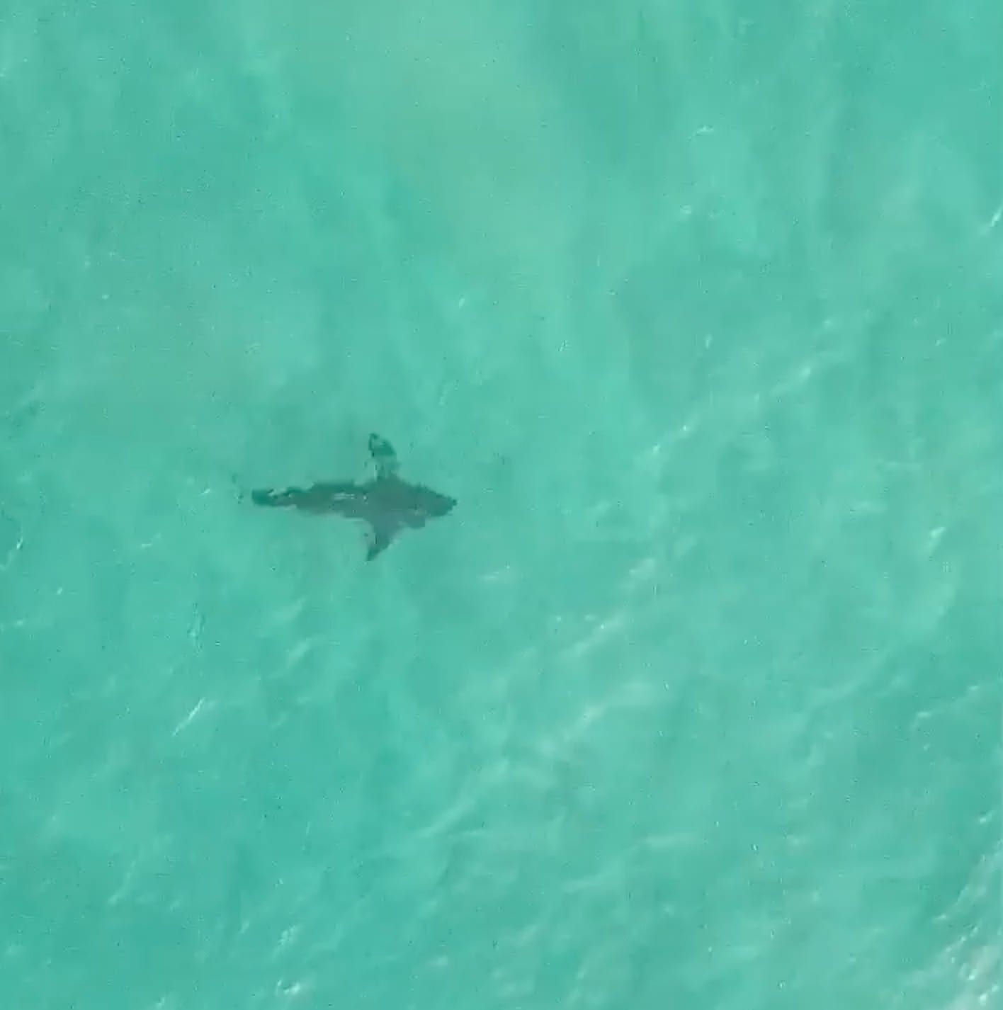 Drone spots great White Shark off Bondi Beach in Sydney, Australia