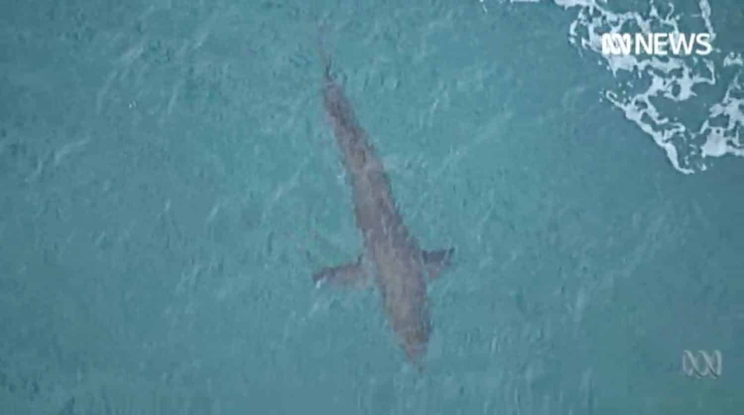 NSW Government doubles number of drones to keep people safe from sharks in Australia