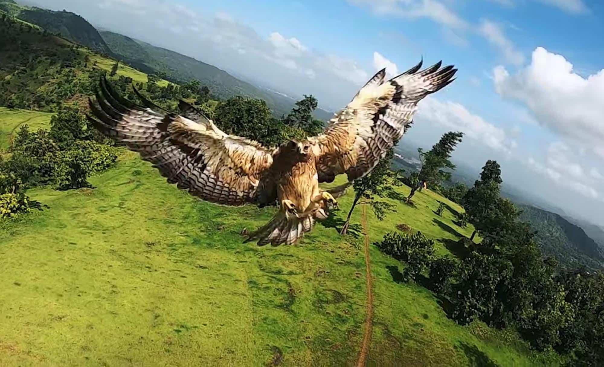 Bird of prey attacks FPV drone in midair