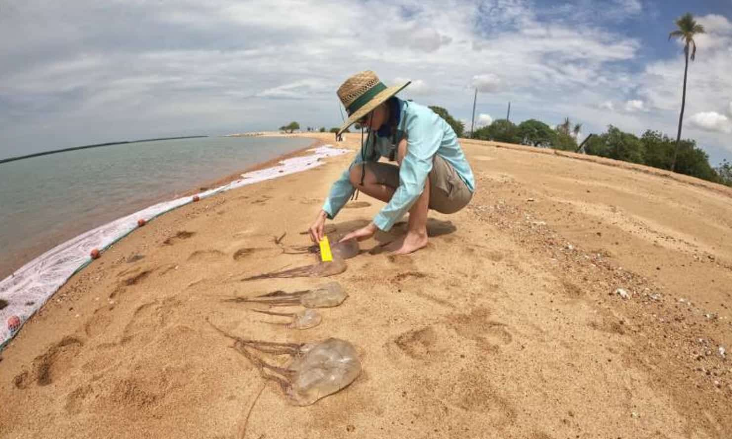Off-the-shelf drones to detect dangerous jellyfish in Australia