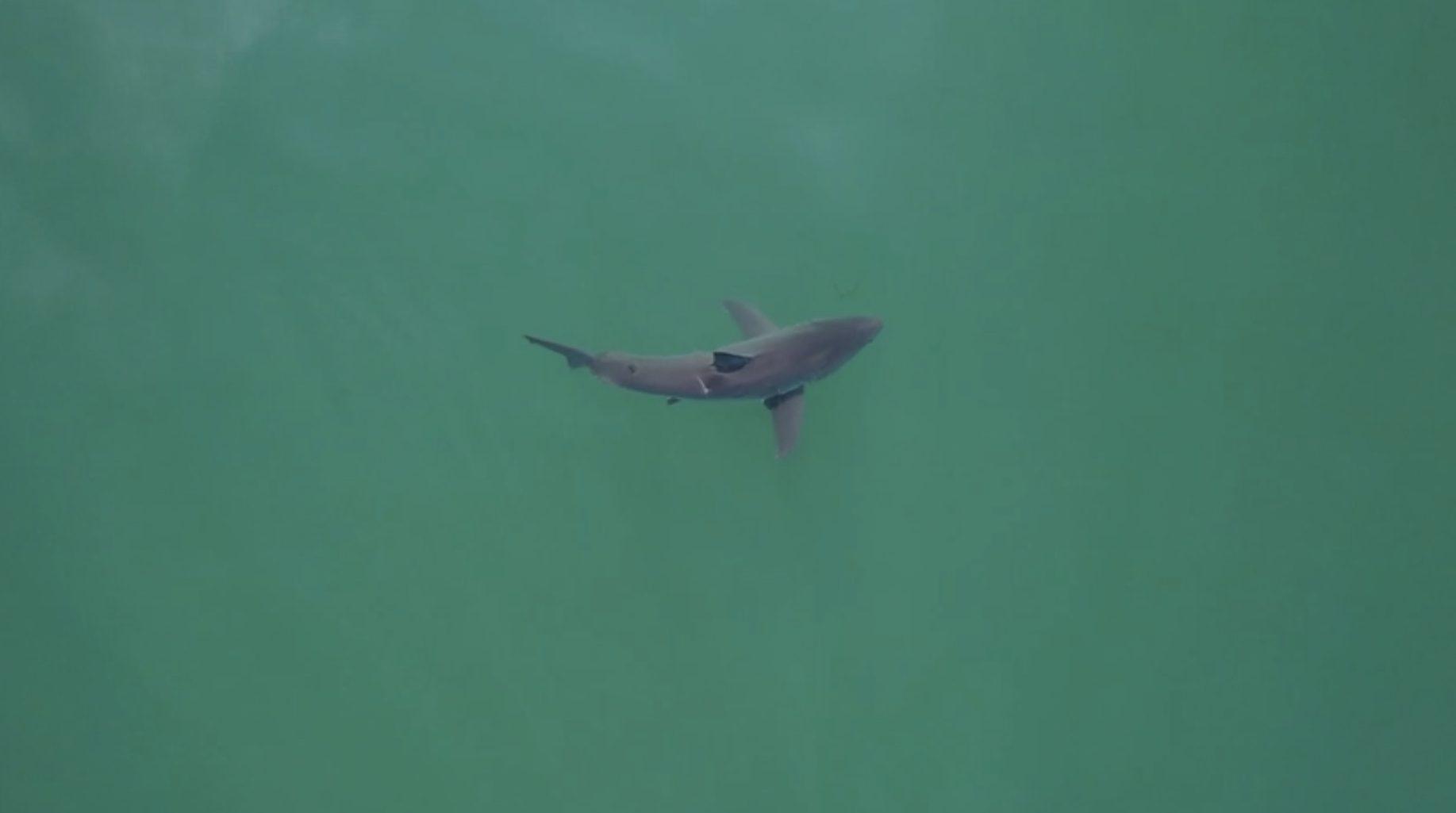 SharkEye uses drones and AI to keep beachgoers safe from sharks