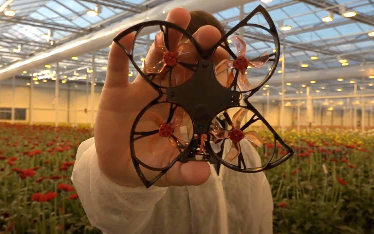 Moth-killing drone hunts and destroys unwanted insects in Dutch greenhouses