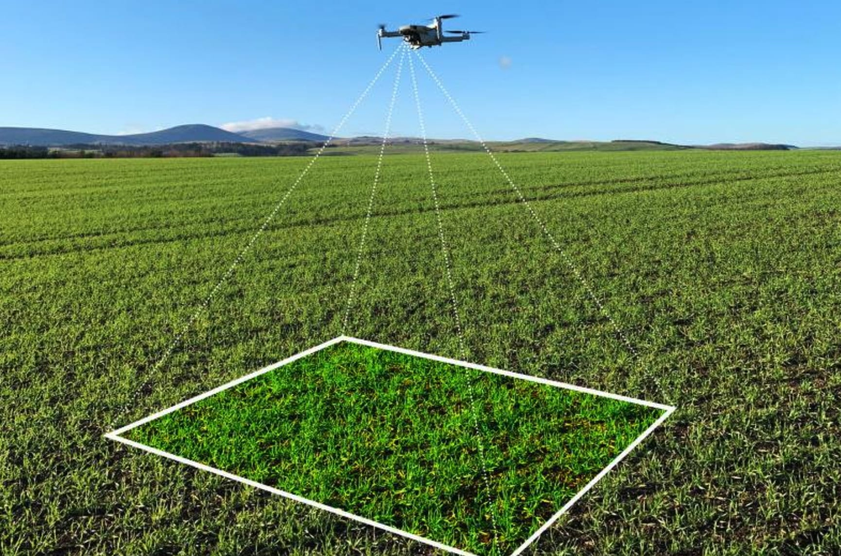 Artificial intelligence (AI) and drones are 10 times faster than traditional crop walking methods used by farmers to monitor the growth and health of their plants.