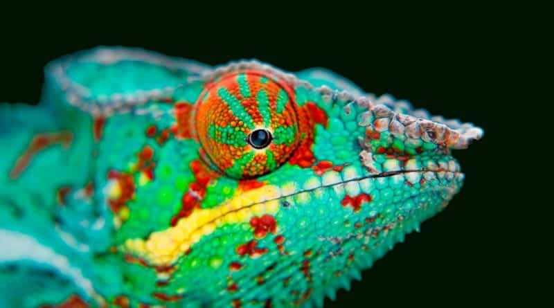 Scientists develop 'chameleon drone' that can change color