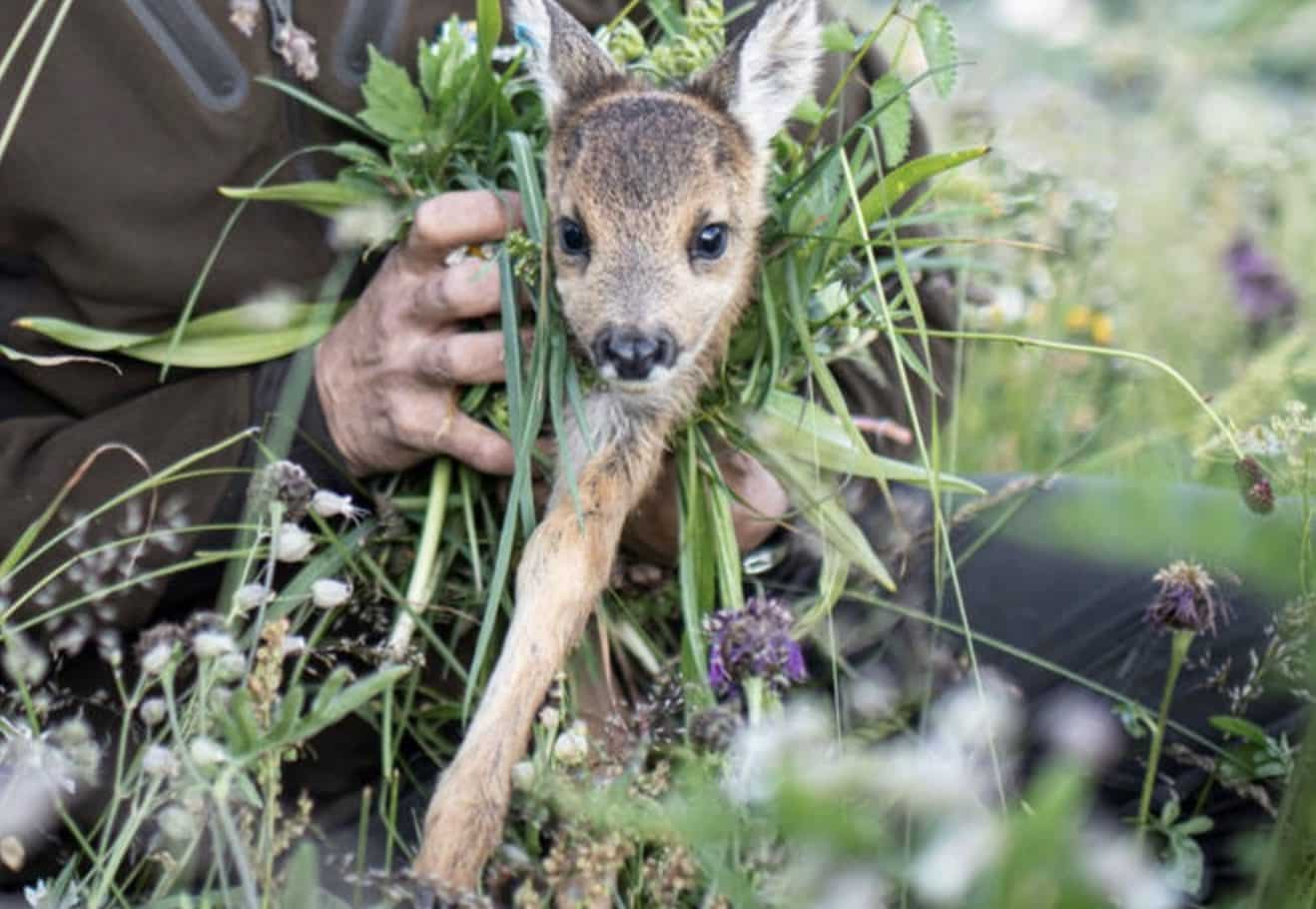 Thermal drones helped save 476 fawns in Switzerland